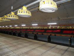 Legehennenbetrieb Beleuchtung toni-0003